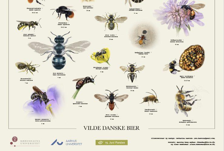 Plakat med vilde danske bier