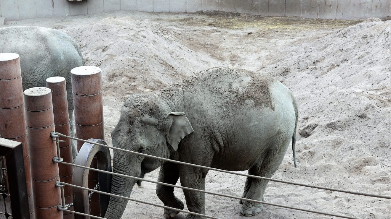 Givskud Zoo - Zootopia fejrer 50 års jubilæum