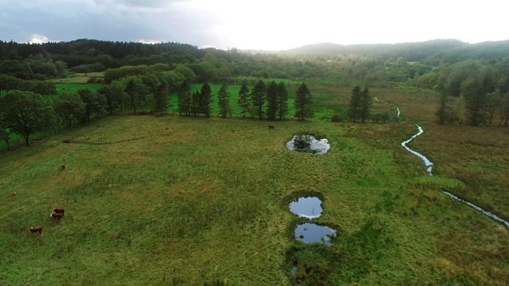 Vejle Kommune indvier nyt vådområde i Rostrup Mose ved Tykhøjet Krat