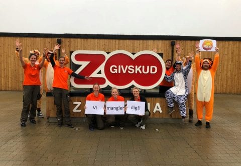 Job i Givskud ZOO