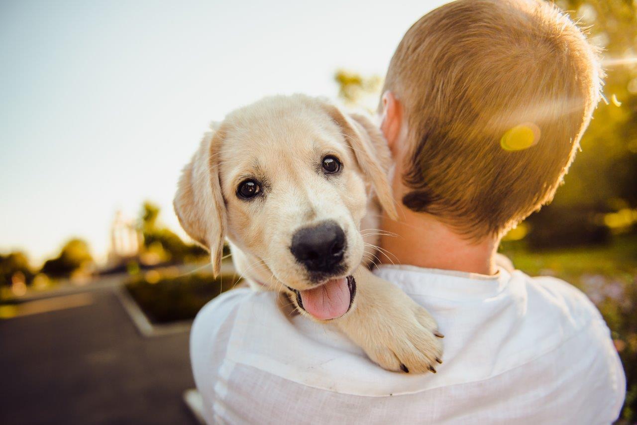 Gratis portrætbillede med dit kæledyr: Plantorama i Vejle inviterer til Dyrenes Dag