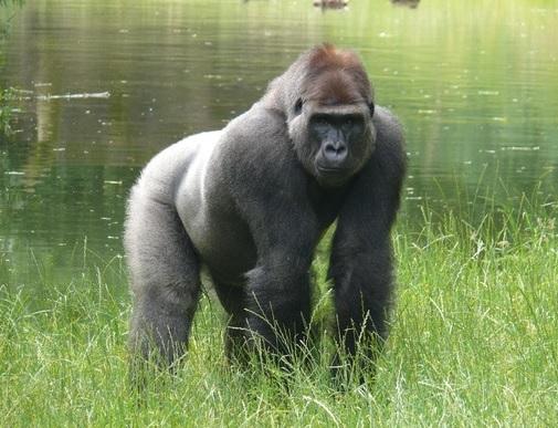 Vil du være en af Givskud Zoos Venner?
