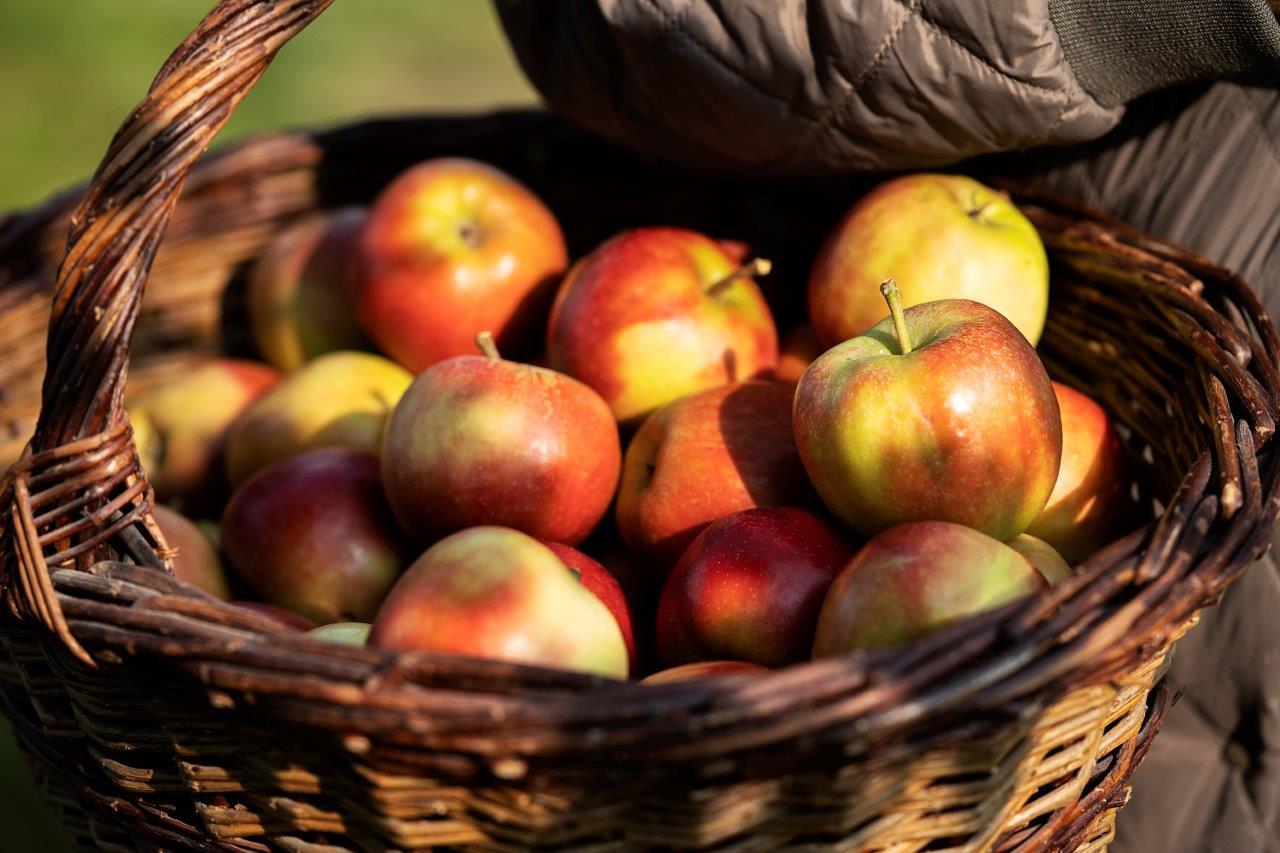 Kom til Havens Dag i Plantorama i Vejle og prøv årets æblejuice